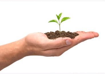 main avec plante