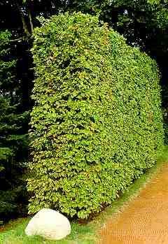 Jardin service entretien de votre jardin pour for Prix entretien jardin